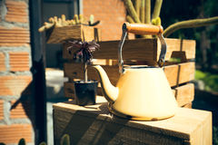 Teapot with cactus and succulent plants on top of wooden pallet, Stock Photo