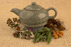Teapot with herbs and roots. Ready fot tea over textured background Royalty Free Stock Photo