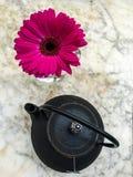 Teapot i gerbera Zdjęcie Royalty Free