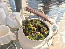 Teapot rośliny garnek obrazy stock