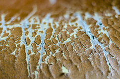 Tear on the leather sofa Royalty Free Stock Images