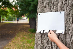 Tear off announcement. Hand picking a part of blank announcement pinned on a tree Stock Images