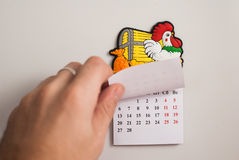 Tear-off calendar, a symbol of the new year rooster,. White background, hand tears off the calendar Royalty Free Stock Images