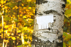 Tear-off paper notice on birch trunk. In autumn urban park Stock Photo