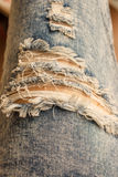 Tear in old worn out jeans Stock Image