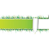 Tearing paper and grass vector Royalty Free Stock Images
