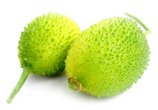 Teasel gourds. Over white Background Stock Image