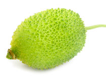 Teasel gourds. Over white Background Royalty Free Stock Images
