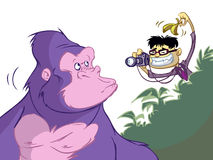 Teasing a gorilla Stock Image