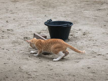 Teasing kittens. Kittens are teasing each other on the ground Stock Images