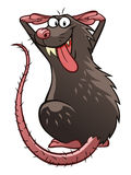 Teasing rat Stock Image