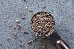 Dill Seeds. A teaspoon of dill seeds Royalty Free Stock Image