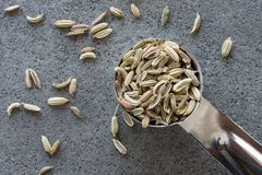 Fennel Seeds. A teaspoon of fennel seeds Stock Photography