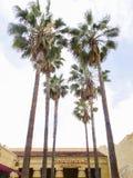 Teatro egipcio debajo de las palmas verdes en Hollywood Foto de archivo libre de regalías