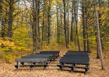 Teatro na floresta do outono fotos de stock royalty free