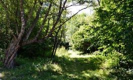 Teberda karachayevo-Cherkessia επιφύλαξης φύσης Στοκ φωτογραφίες με δικαίωμα ελεύθερης χρήσης