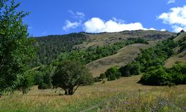 Teberdinsky nature reserve. On the northern slopes of the Greater Caucasus, Russia. Photo taken on: July 27 Saturday, 2013 Royalty Free Stock Image