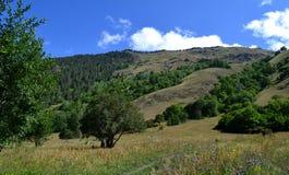 Teberdinsky nature reserve. Royalty Free Stock Image