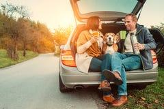 Tebjudning i billastbil - att älska par med hunden sitter i biltruc arkivbilder