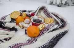 Tebjudning på naturen i vintern Royaltyfri Fotografi