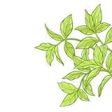 Tebladbakgrund stock illustrationer