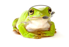 Tech support. A frog with a headset to answer the phone on white Stock Photo