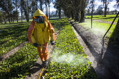 Technical fumigating a flower plantation outdoors. Stock Photos