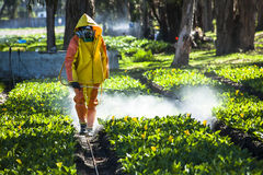 Technical fumigating a flower plantation outdoors. Stock Images