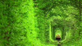 Technical Train in the Tunnel from Deciduous Trees. Summer. Dense deciduous trees formed a tunnel around the railway. The train goes stock footage