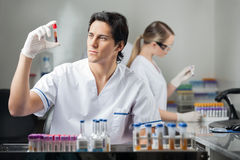 Technician Analyzing Blood Sample In Lab Stock Photography