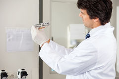 Technician Analyzing Microplate In Lab Stock Images