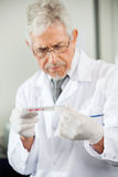 Technician Examining Microtiter Plate Royalty Free Stock Photos