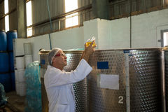 Technician examining olive oil. In factory Royalty Free Stock Image
