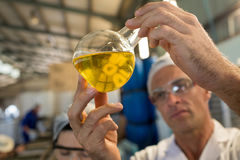 Technician examining olive oil. In factory Royalty Free Stock Photography