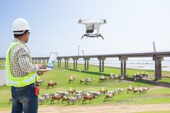 Technician farmer use computer control drone tracking the cow. In smart farm, Technology 4.0 concept stock image