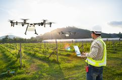 Technician farmer use wifi computer control agriculture drone fly to sprayed fertilizer on grape field, Smart farm concept royalty free stock images