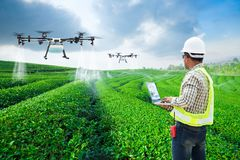 .Technician farmer use wifi computer control agriculture drone fly to sprayed fertilizer on the green tea fields, Smart farm 4.0 stock photography