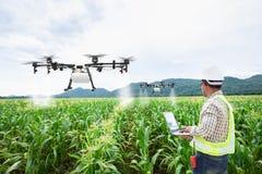 Technician farmer use wifi computer control agriculture drone on sweet corn field stock image