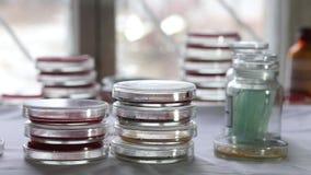 Technician sorting Petri dishes in medical laboratory stock video