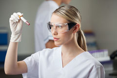 Technician Testing Blood Sample In Lap. Female lab technician testing blood sample in test tube stock photo