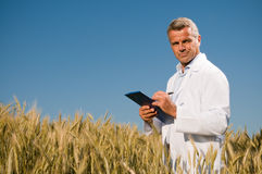 Technician in a wheat field Stock Image