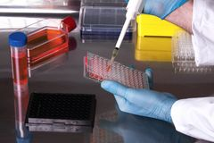Researcher working with cell cultures under sterile cabinet. Technician working in the laboratory pipetting samples in microplates in the sterile hood / Royalty Free Stock Image
