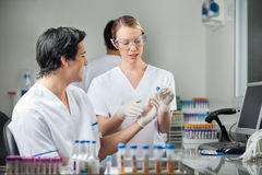 Technicians Analyzing Sample In Medical Lab Stock Images