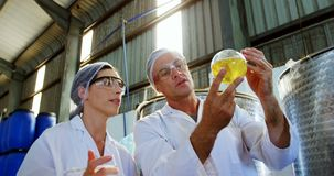 Technicians examining olive oil. In factory stock video footage
