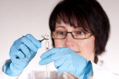 Technicien de laboratoire supportant le tube à essai Photographie stock