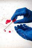Technicien légal prélevant l'échantillon d'ADN provenant de la tache de sang image stock