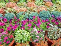 Technicolor Exhibition flowers-I Stock Photos