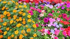 Technicolor Exhibition flowers-II Stock Image