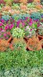 Technicolor Exhibition flowers-III Stock Image