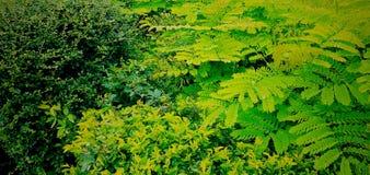 Technicolor green royalty free stock image
